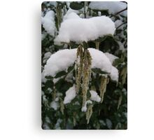 Droop in White Snow  Canvas Print