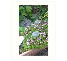 Garden Bee  Art Print