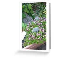 Garden Bee  Greeting Card