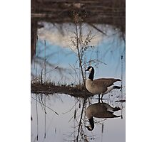 Goose Reflection Photographic Print