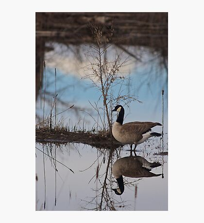 Goose Reflection Photographic Print