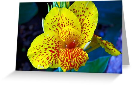 African Yellow by phil decocco