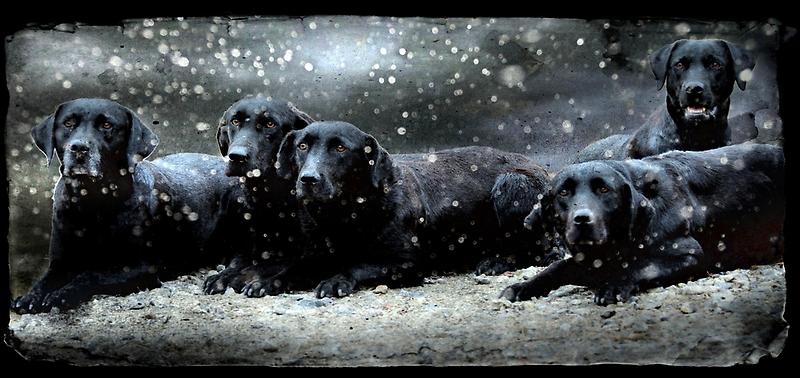 Labby Christmas by Alan Mattison