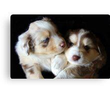 Adorable Australian Shepherd Puppies Canvas Print