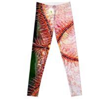 Brittle Sea Star Fish Leggings