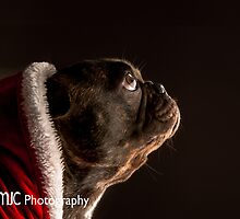 Are you Santa? by Mark Cooper