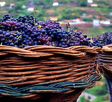 Madeira Grapes by paulrommer