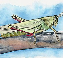 Grasshopper Watercolours and Ink by DetailArtist