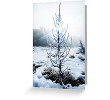 Real Snowy Christmas Tree Greeting Card
