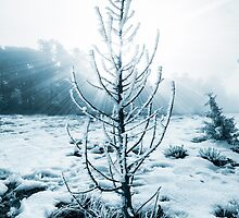 Real Christmas tree with snow by Jerome Obille