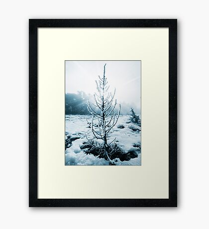 Real Christmas tree with snow Framed Print