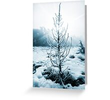 Real Christmas tree with snow Greeting Card