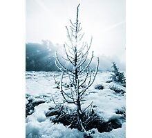Real Christmas tree with snow Photographic Print