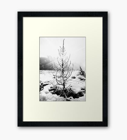 Real Christmas Tree in Black and White Framed Print