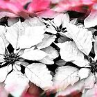 Snowflakes Poinsettia by Poete100
