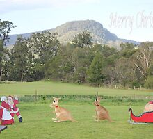 Bush Christmas by JDWPhotos