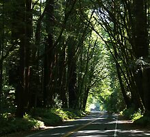 Redwood Highway by Arod28
