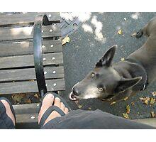 Dog Park Photographic Print
