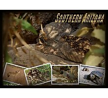Southern AZ Critters Photographic Print