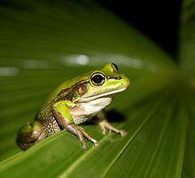 Green and Golden Bell Frog by John Marriott