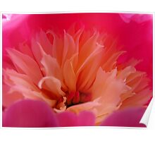 Inside a Chinese Peony Poster