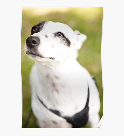 Deaf Rescue Dog Is Now Loved *PROCEEDS TO CHARITY* Poster