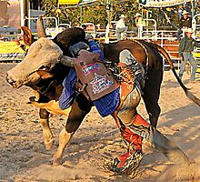 Rodeo, Yep This is Going To Hurt. by Barbara  Jean