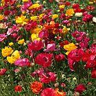 Memories of Spring #1 by Aileen David
