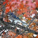 Blue jay, Red tree by Kate Farkas