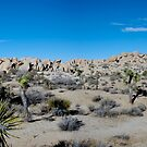 A View of Joshua Tree National Park by philw