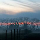 Misty by Caroline Anderson