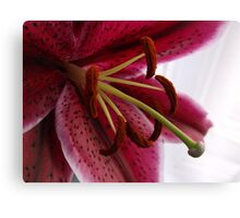 Macro Red Oriental Lily Canvas Print