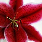 Rich Red Oriental Lily by edesigns14