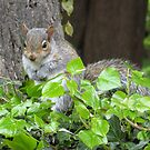 Baby Squirrel 4 by shiro