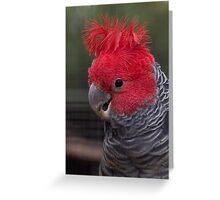 Gang Gang Parrot Greeting Card