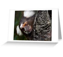 Cotton Eared Marmoset Greeting Card