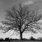 Cemetery Tree by photodug