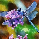 Blue Dragonfly on Wild Garlic Vector by taiche