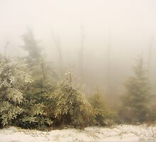 Winter Fog - Great Smoky Mountains  by JHRphotoART