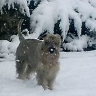 He loves the snow by Ana Belaj