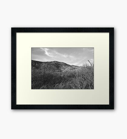 Tumble In The Weeds Framed Print