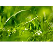 Grass after rain Photographic Print