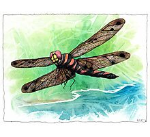 Dragonfly Notes Photographic Print