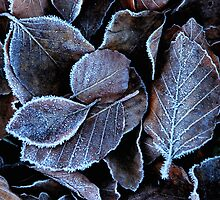 Leaves on the ground after a frosty night by jchanders