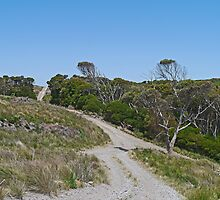 Road to Mt Cameron West, Tasmania, Australia by Margaret  Hyde