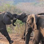 Elephants at play by corrado