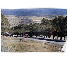 November Cattle Drive  Poster