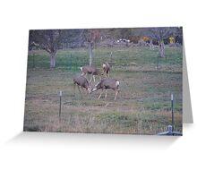 Back Yard Stomping  Greeting Card