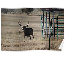 Young Buck in the Rut Poster
