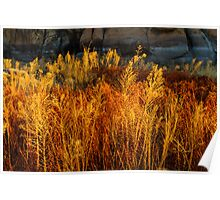 Flaming Grass Poster